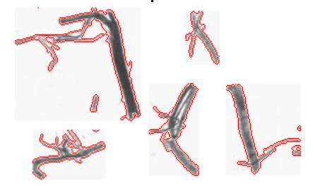 classification of hemp fibers based on morphological